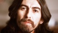 george-harrison-tree-destroyed