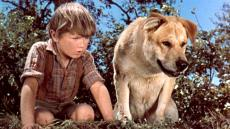 kevin-corcoran-old-yeller