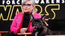Carrie Fisher's Adorable Dog Gary Joins Instagram — See His Cutest Pics!