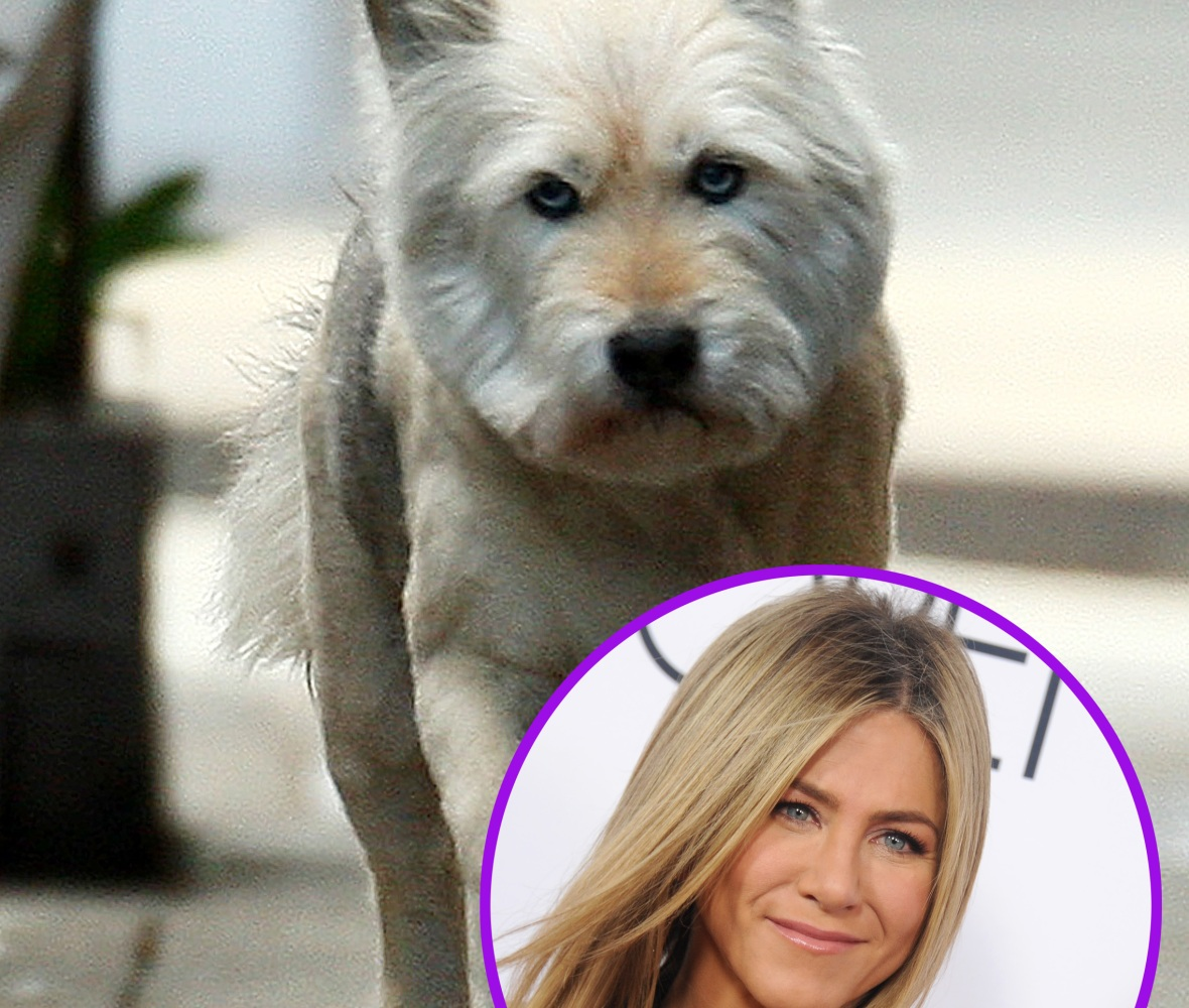 jennifer aniston dog splash/getty images