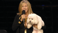 barbra-streisand-dog-sammie