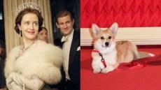 queen-dog