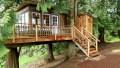 treehouse-teaser