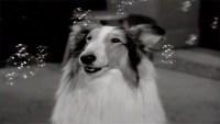 lassie-elizabeth-gaskell