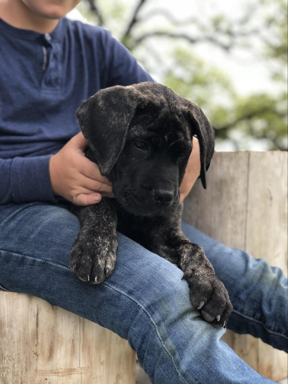 chip gaines joanna gaines new pet