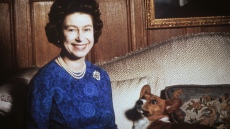 queen-elizabeth-corgi-died-copy