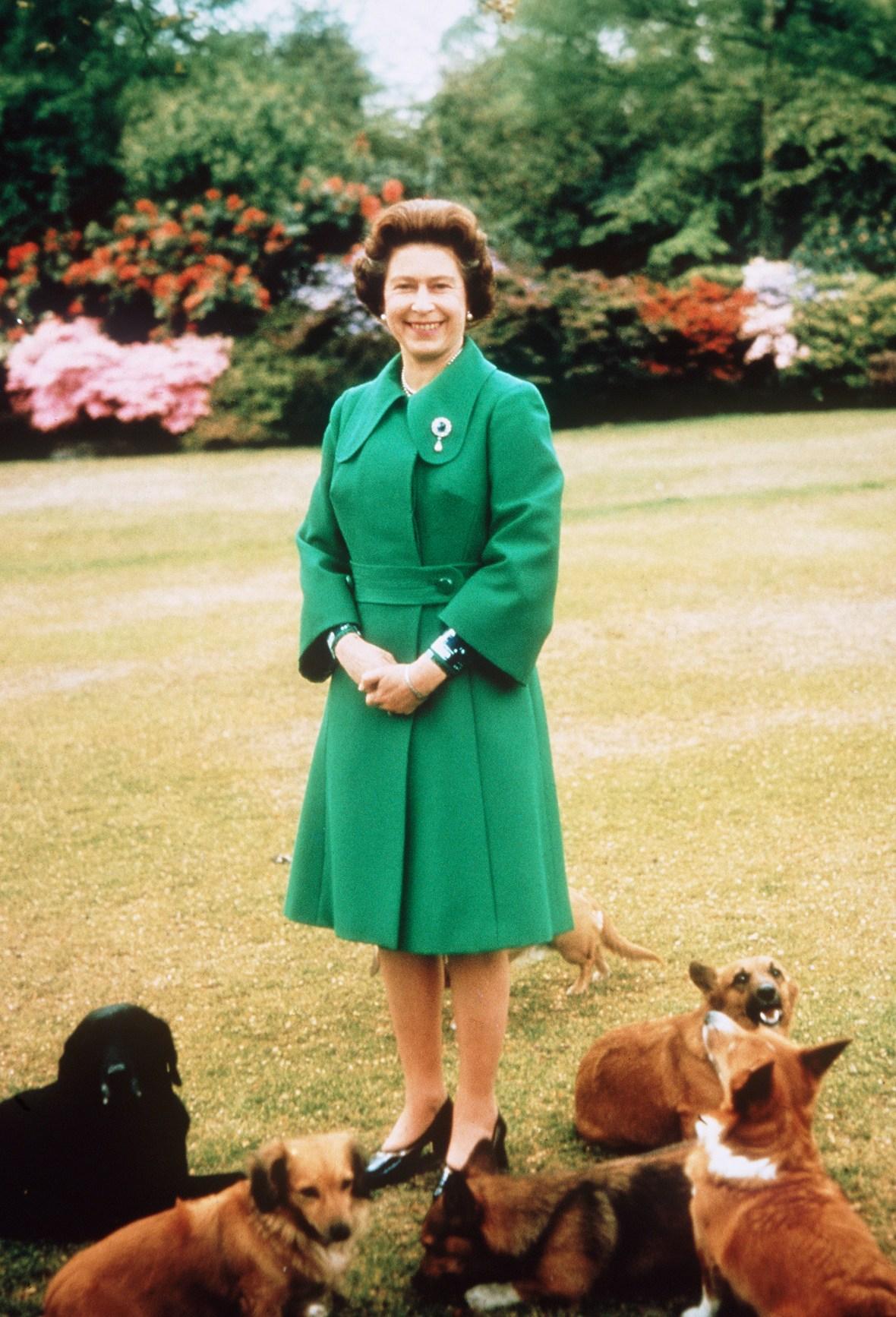 queen elizabeth corgis getty images