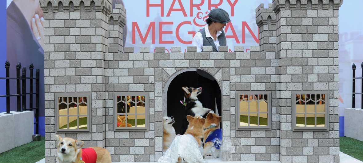 corgi royal wedding lifetime movie