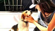 meghan-markle-rescue-dog-guy