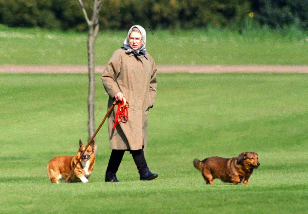 Queen Elizabeth corgi died