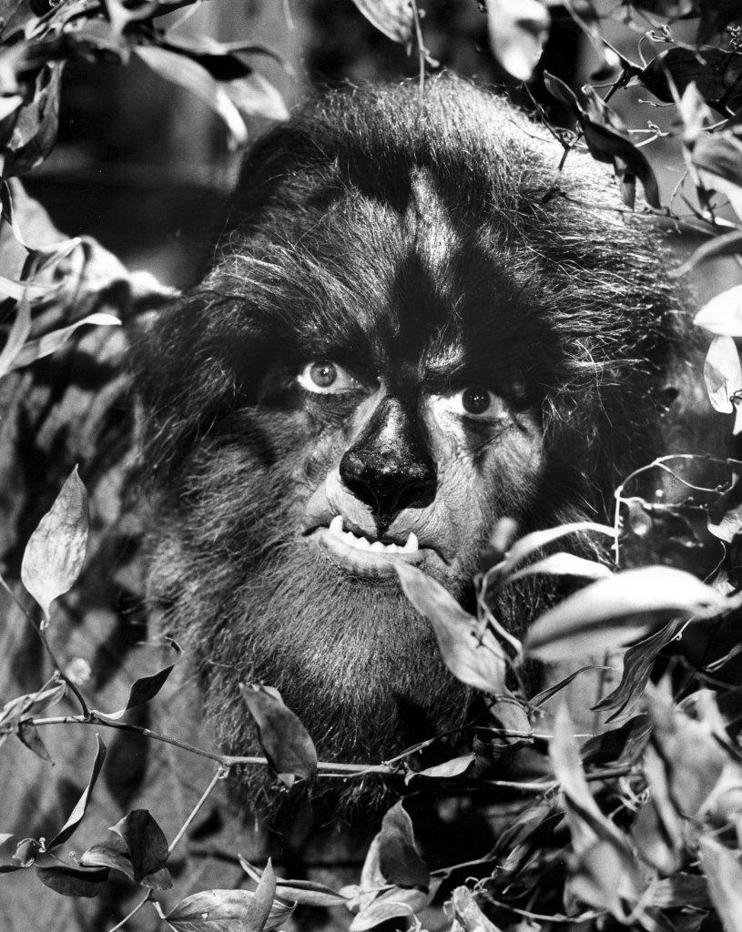 dark-shadows-werewolf