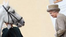 Queen Elizabeth Horse