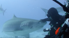 will-smith-facebook-watch-bucket-list-show-swimming-with-sharks copy