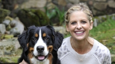 Sarah Michelle Gellar Dog Bella Died