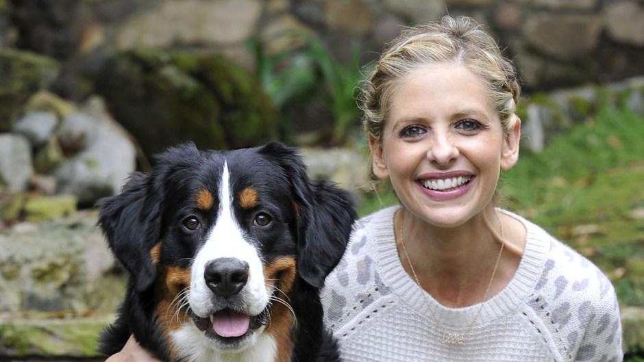 Sarah Michelle Gellar Dog Bella Died