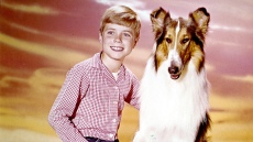 jon-provost-and-lassie