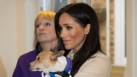 meghan-markle-mayhew-patronage-animal-rescue