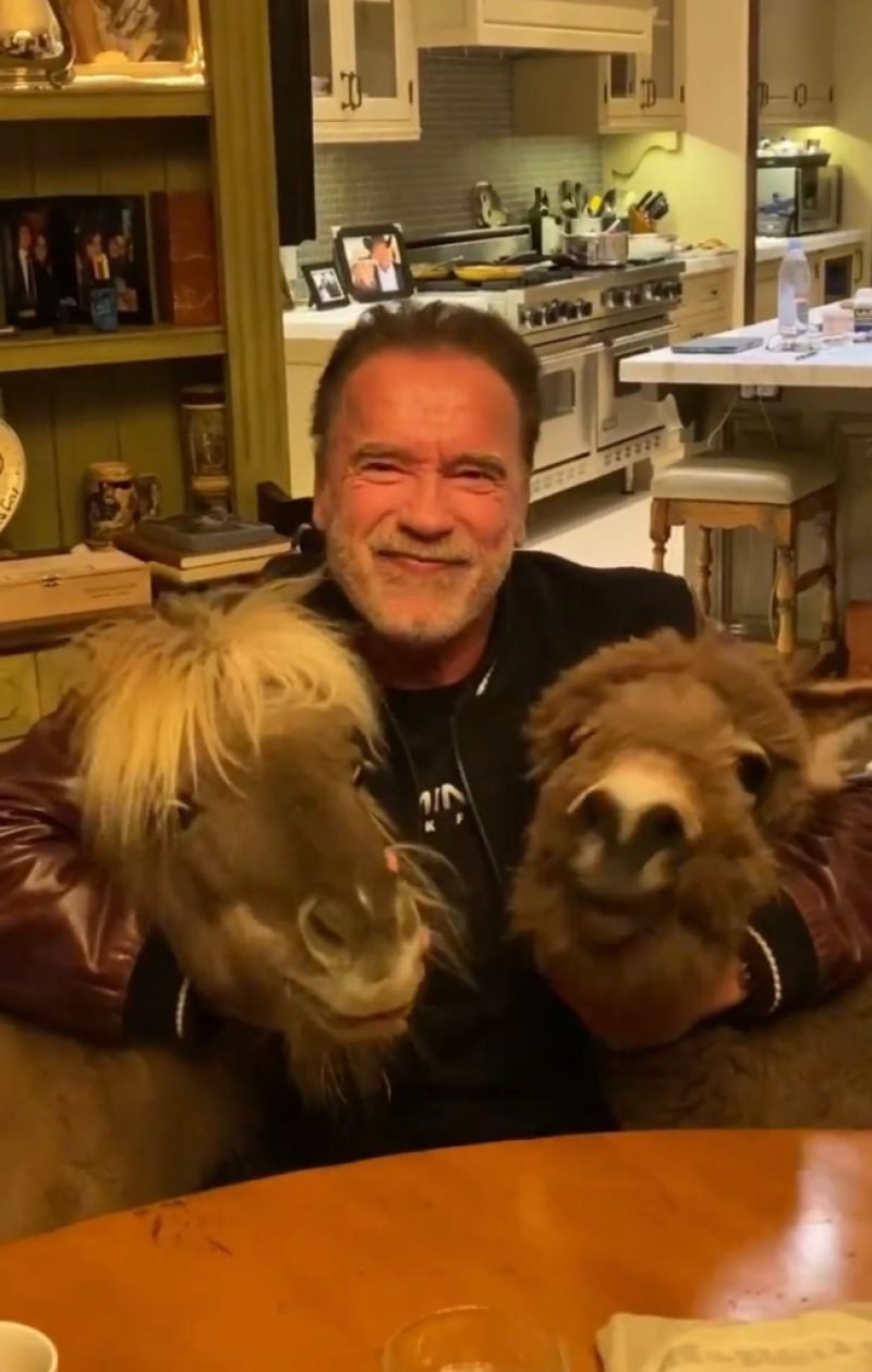 arnold-schwarzenegger-donkey-pony-coronavirus-psa