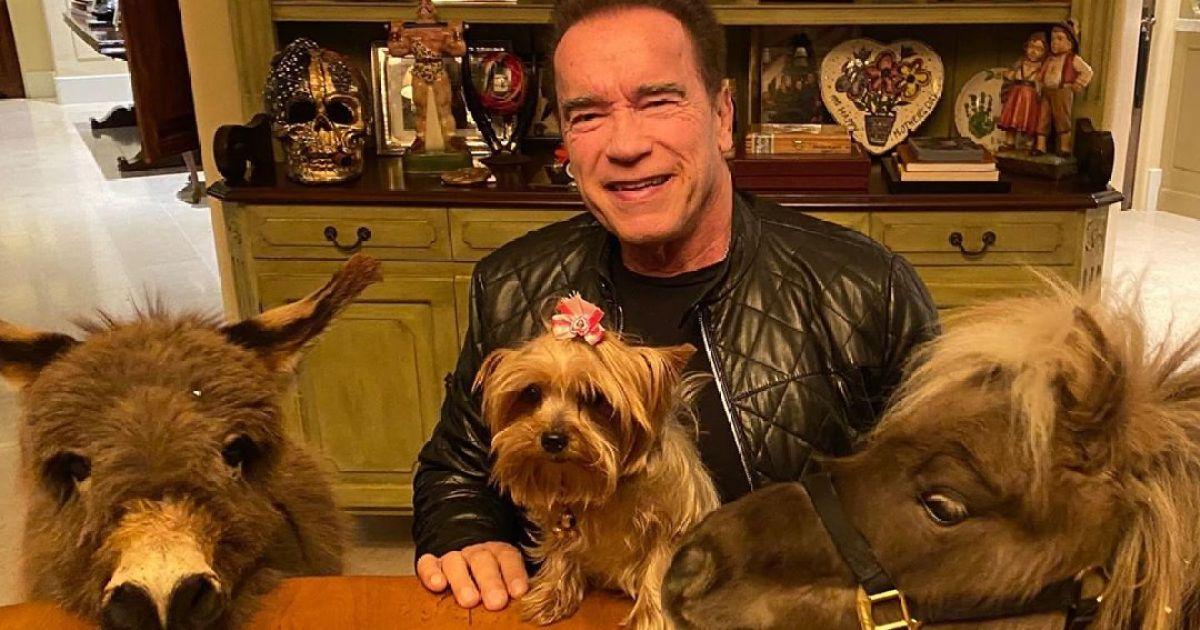 Schwarzenegger Esel