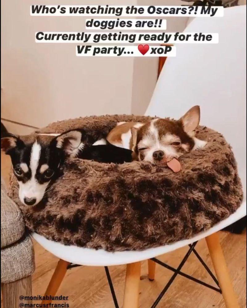 Paula Abdul dogs