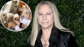 Barbra Streisand Dogs Are Captivated By Her Granddaughter Westlyn